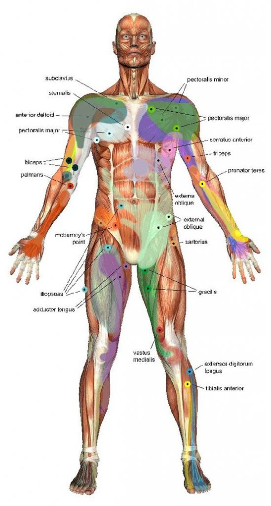 Deep Tissue massage - trigger point therapy, Santa Barbara, Ca.
