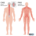Central Nervous System (CNS) Massage Therapy, Santa Barbara, Goleta
