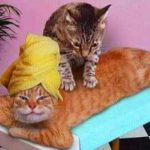 Relaxing, Rejuvenation, Wellness, Wellbeing Massage, Santa Barbara, Goleta, Ca