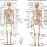 206 bones of the human skeleton. But we start with 270 bones!