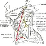 Nerve Pain in the Neck & Shoulder